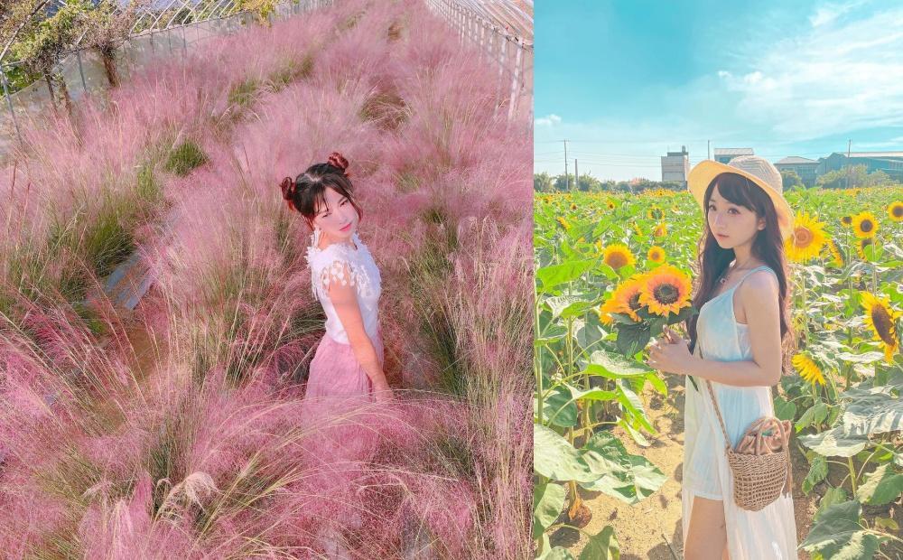 粉黛亂子草、向日葵迷宮一次拍!桃園「粉紅棉花糖花海」正值最佳觀賞期