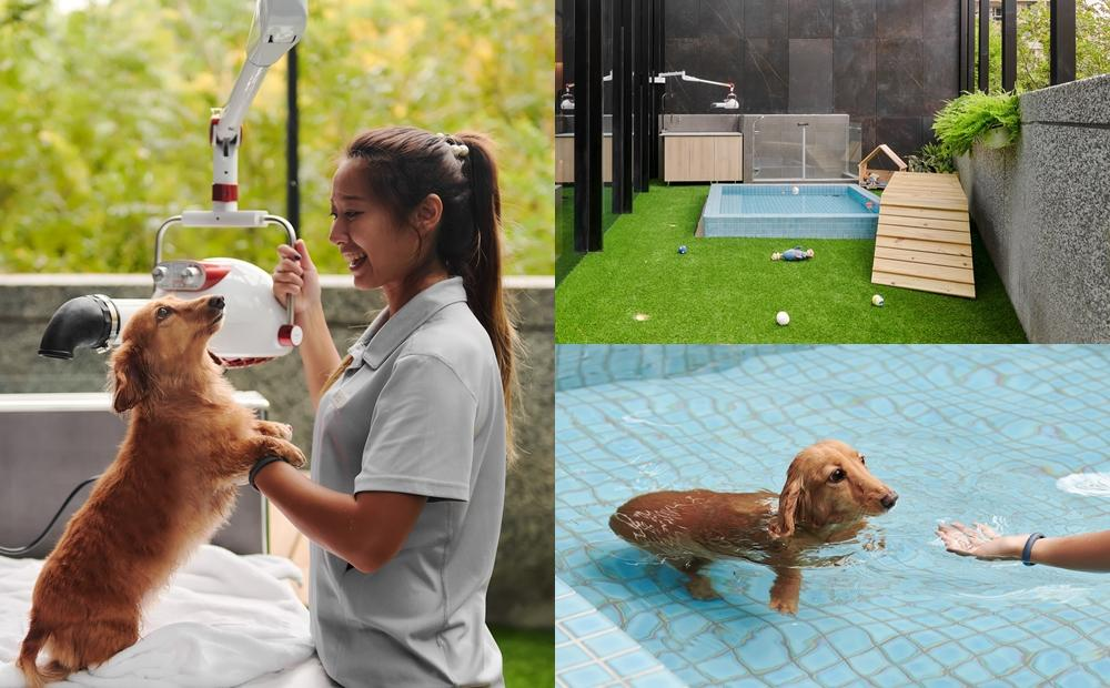 帶毛小孩泡溫泉度假去!宜蘭礁溪「飯店級寵物旅館」住宿美容全包