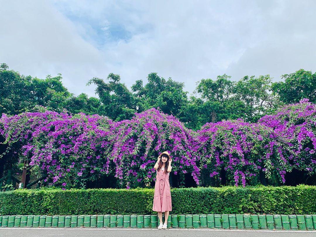 夢幻紫爆快來拍!新北「蒜香藤花瀑」綿延200公尺、賞花期倒數一週