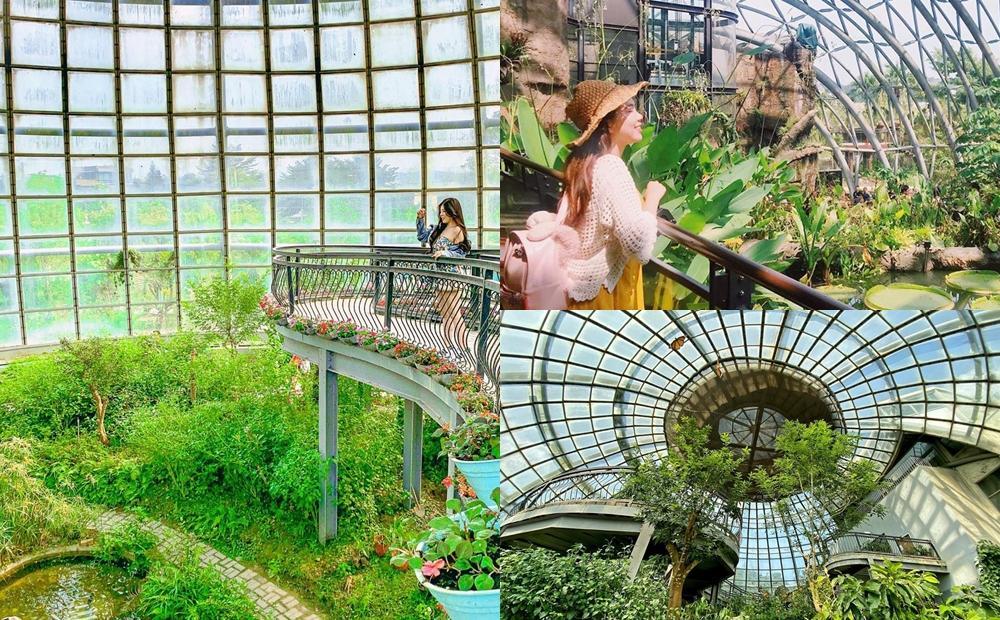 「台版樟宜機場」漫步熱帶雨林!溫室蝴蝶花園、穿山甲玻璃屋IG瘋打卡