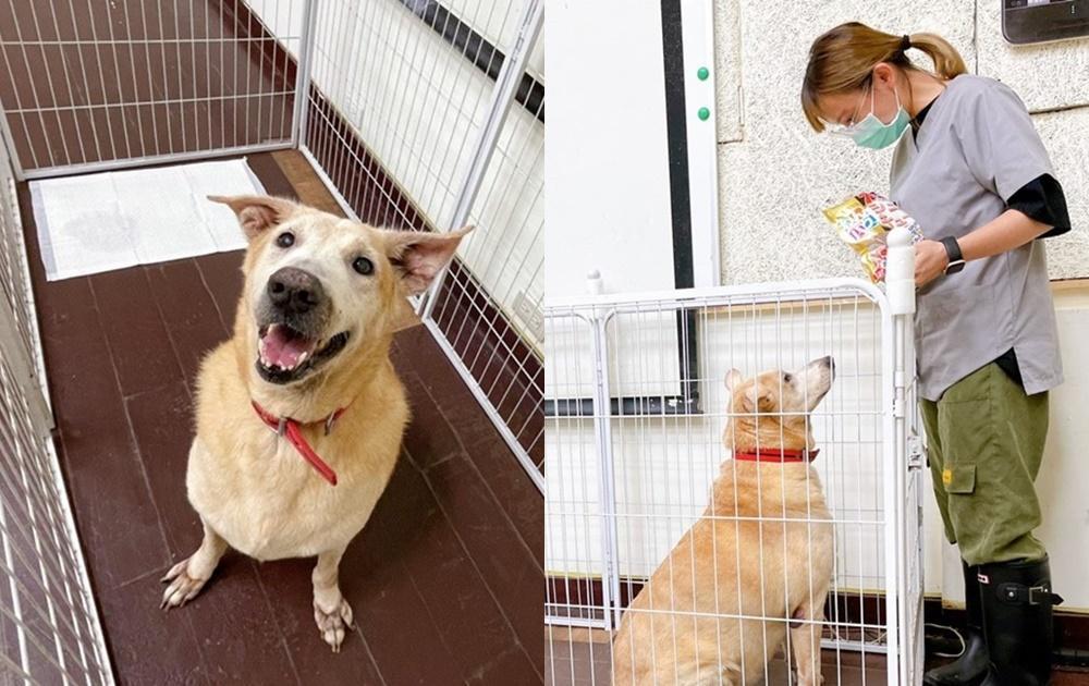 防疫期間遛狗不出門!寵物訓練師分享3招教會毛孩在家上廁所