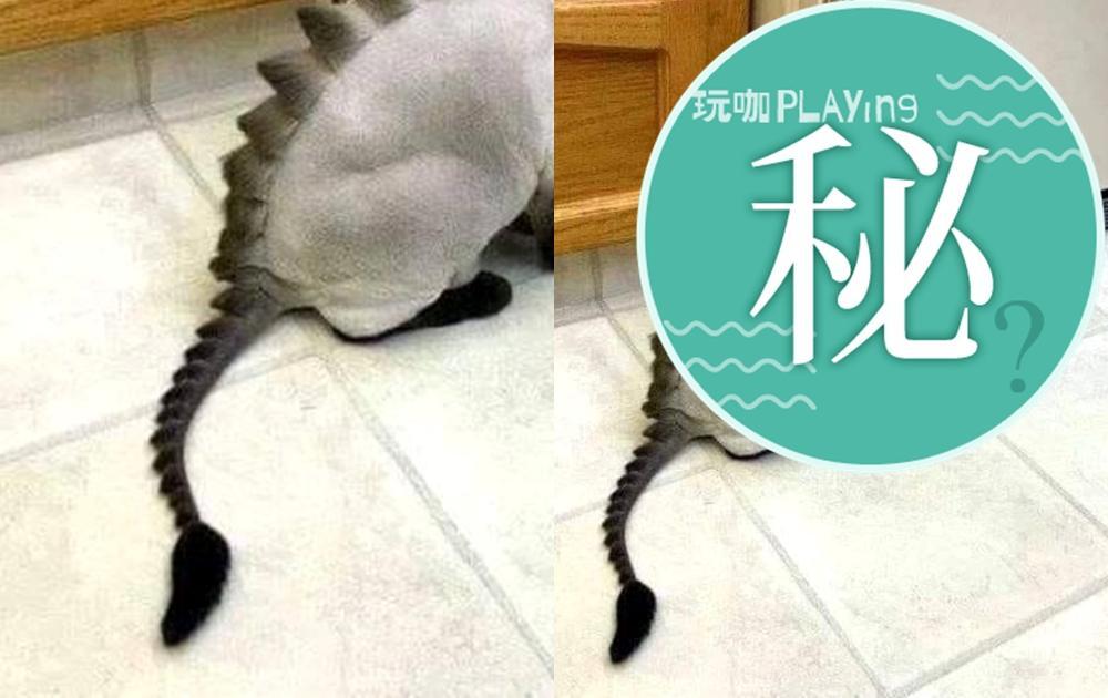 萌貓變身「喵吉拉」!他手動進化恐龍貓貓  網友驚呼:是劍龍無誤