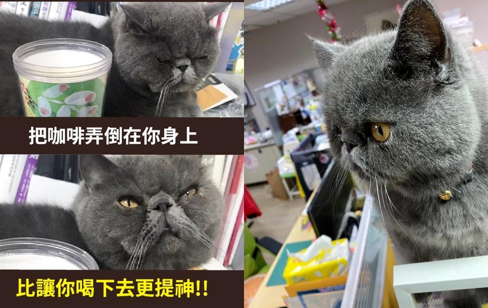加菲貓化身「臭臉貓Boss」超嗆語錄被狂讚!10張上班族最有感梗圖必看