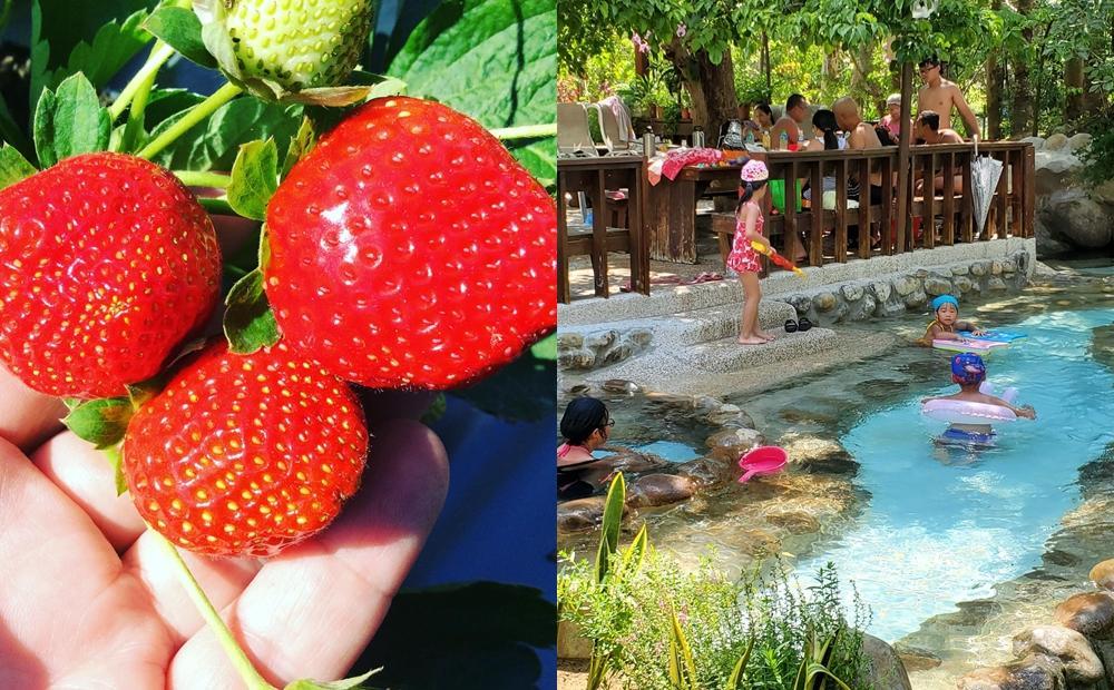 苗栗大湖草莓季提前開採!11家草莓園「滿千再送泡湯券」免費泡美人湯