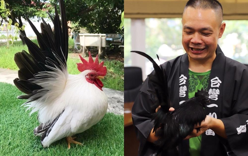 顛覆印象「寵物雞」一樣療癒!全台第一屆觀賞雞交流活動週末登場