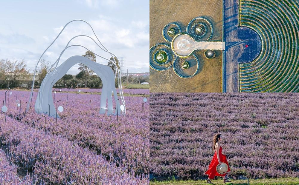 「2020桃園仙草花節」5.8公頃紫爆花海曝光!拍仙境鞦韆、逛市集更好玩