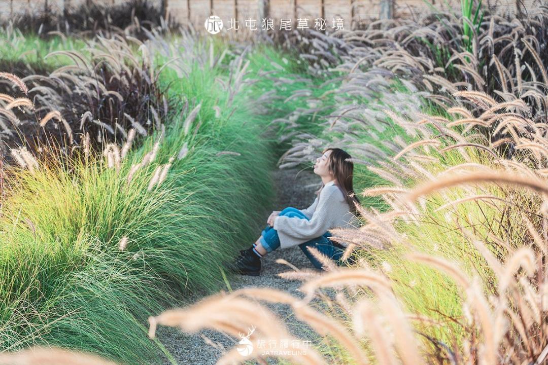 夢幻紫色狼尾草、「免攻頂」抹茶山一次拍!台中超級秘境Google搜不到地標