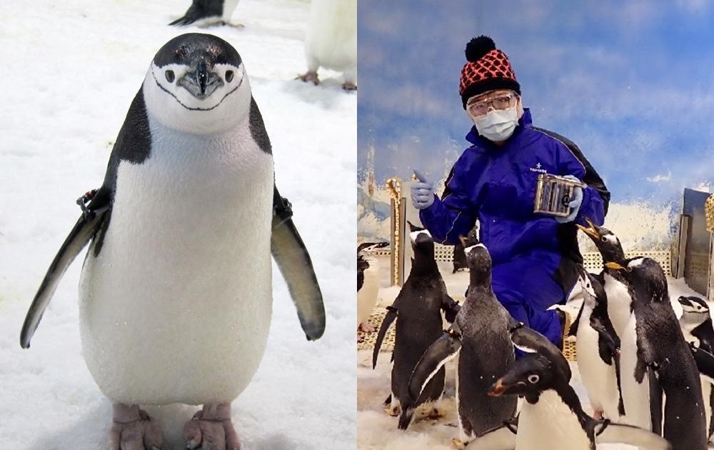 每日限量8人今天開搶!屏東海生館全台首創「企鵝飼育員體驗」帶你秒飛南極