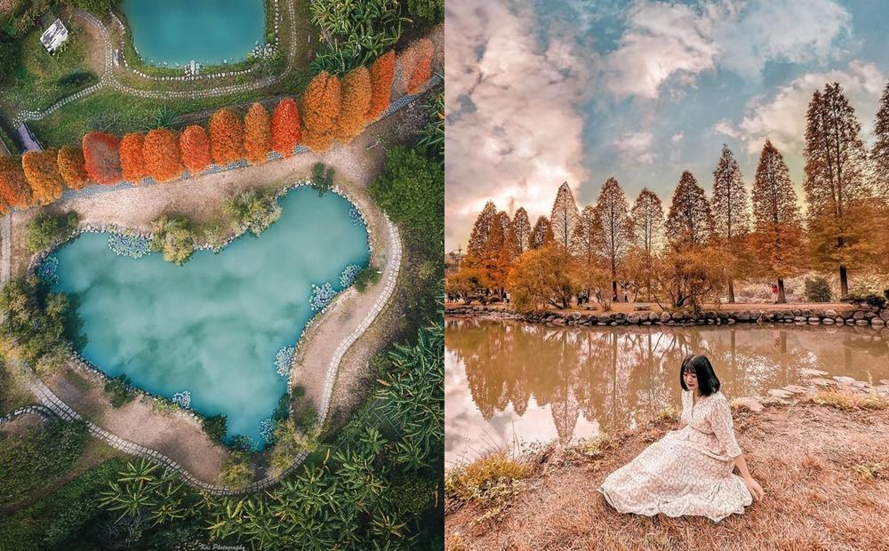新竹「糖果色落羽松秘境」倒映在愛心池塘!順遊金黃柿子海好療癒