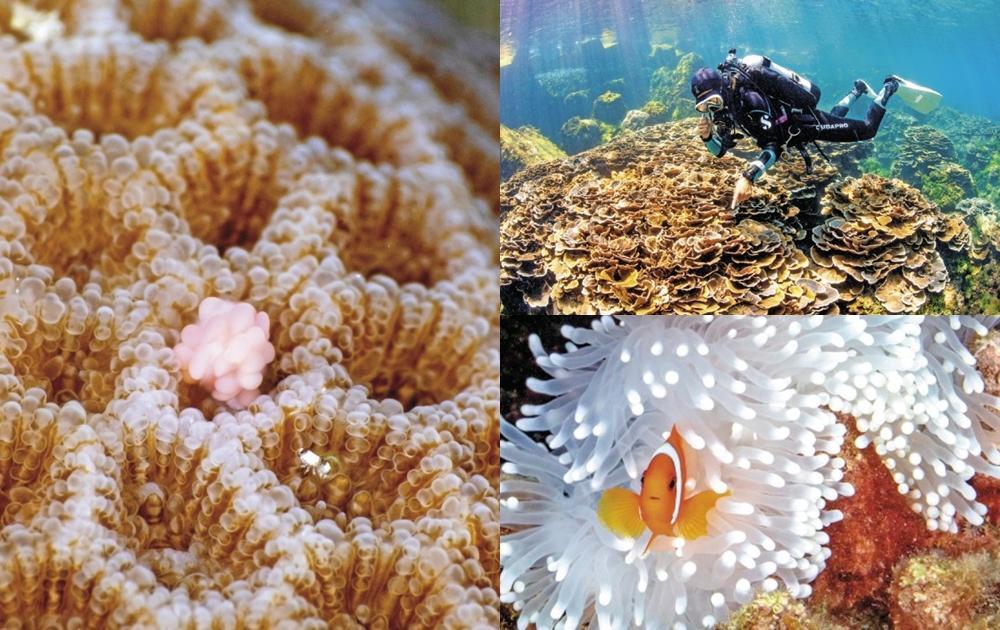 「珊瑚白化嚴重」如海中爆雪!水底攝影師心痛記錄台灣珊瑚礁的美麗與哀愁