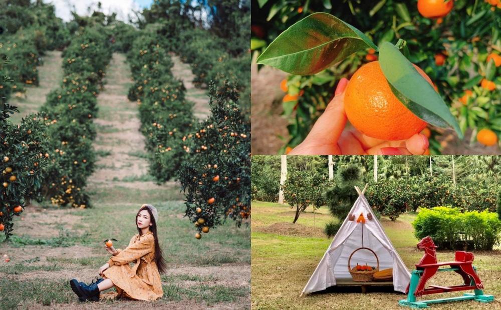 新竹全新「橘子園」野餐採果像在國外!親子遛小孩還能拍純白小帳篷