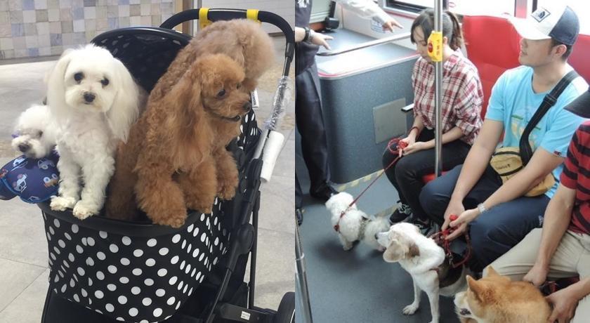 春節帶毛孩返鄉出遊必看!「大眾運輸規定總整理」這些動物禁止上車