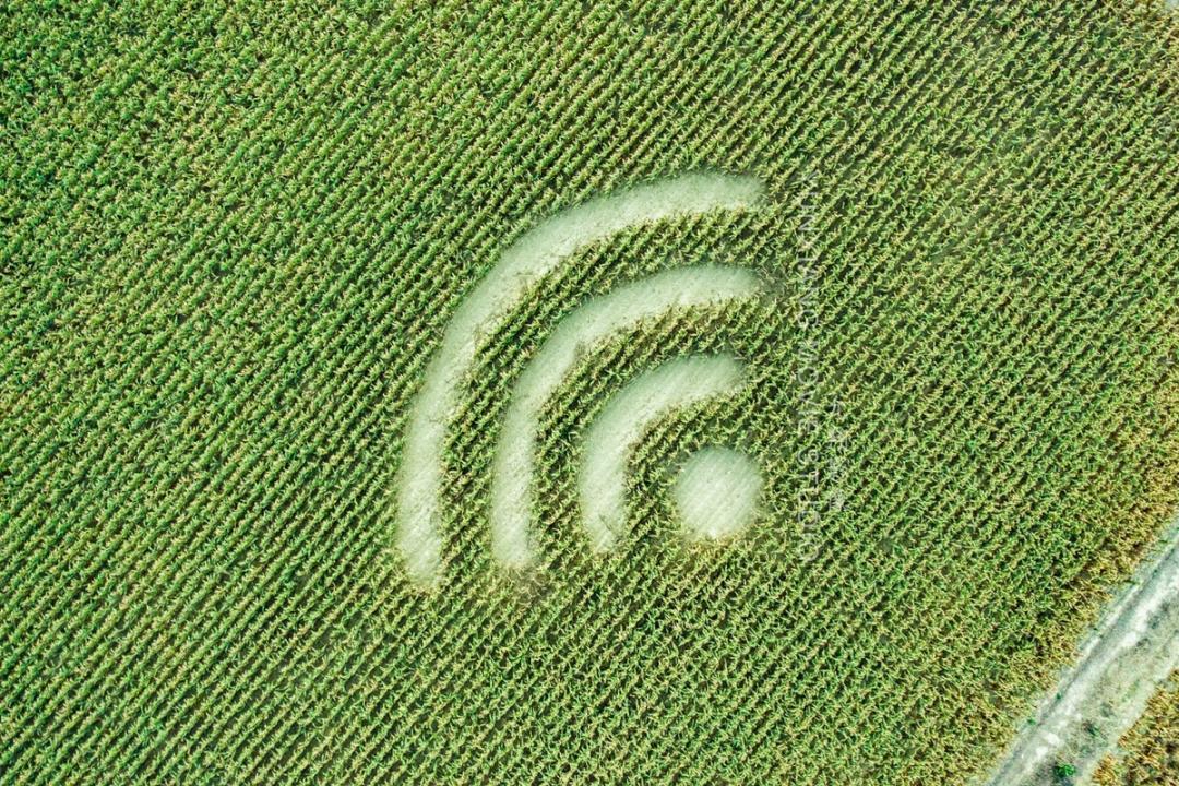 嘉義玉米田出現神秘「WiFi 麥田圈」引發網友朝聖!背後由來曝光