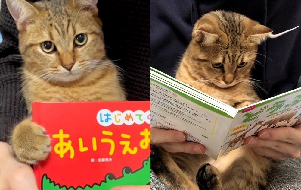 貓小孩愛看書!打開繪本露出超專注眼神...網友大讚:比我還用功