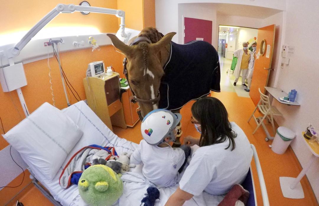 賽馬變療癒「馬醫生」!牠陪伴安寧病患度過最後人生
