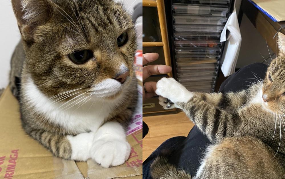 貓掌肉球夾擊!他貼「貓咪握手會」影片 30萬網友暴動:想報名!