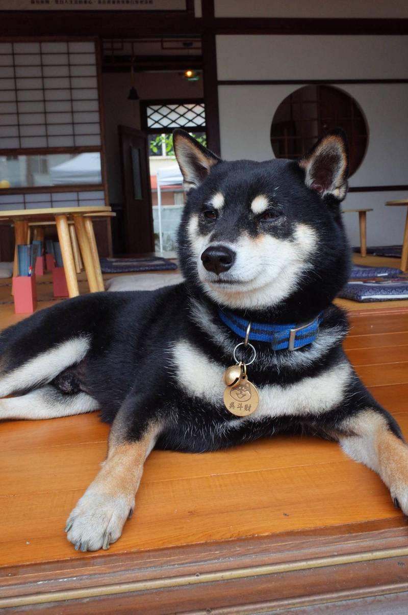 花蓮日式古蹟變「柴犬咖啡館」!超人氣「雙店長」陪你吃美食、喝柴柴拿鐵