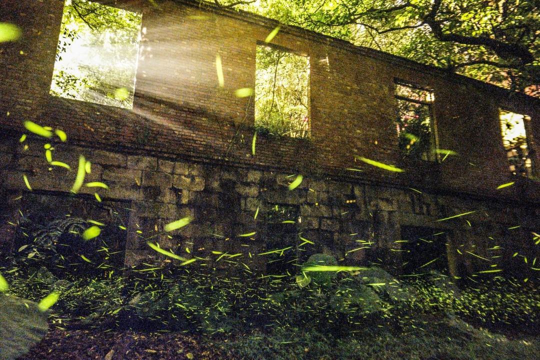 北部最美8大螢火蟲秘境!台北生態步道搭捷運就能到、新北廢墟建築賞螢河