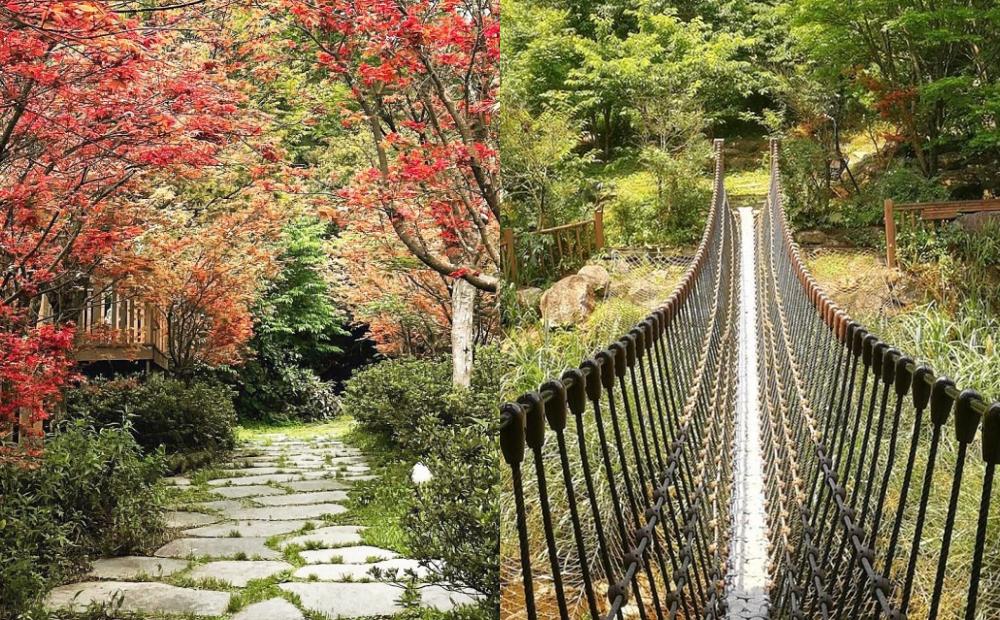 春天也能賞楓!台北陽明山打卡「最美楓紅隧道」野溪戲水走吊橋