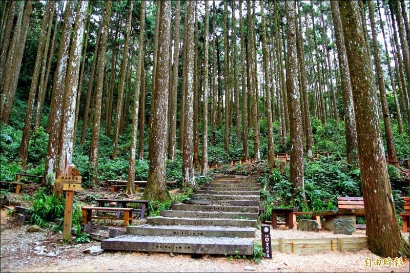 高雄「小溪頭」藤枝森林遊樂區 5 月重新開放!入園票價、線上預約方式公布