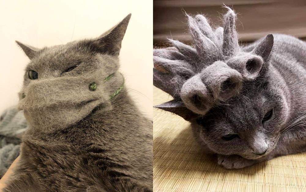 貓毛出在貓身上!飼主手作百變假髮  俄羅斯藍貓變身「JOJO主角」