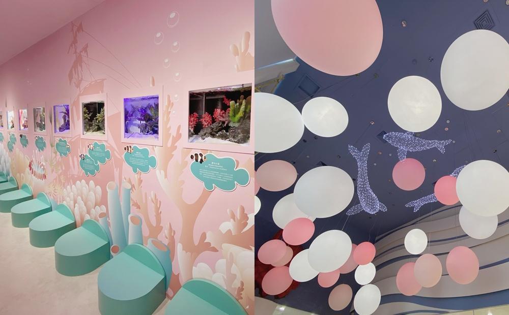 澎湖花火節必拍新景點!「粉紅小丑魚水族館」免門票親近20多種海洋生物