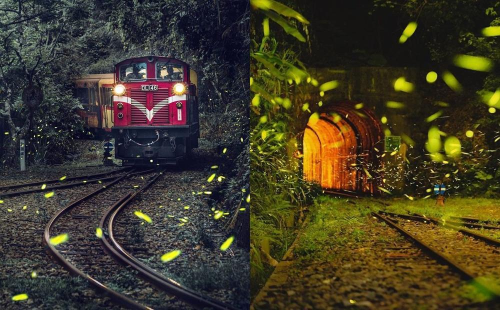 開車也到不了的無人車站!嘉義超神祕「螢河鐵道」大量螢火蟲漫天飛舞
