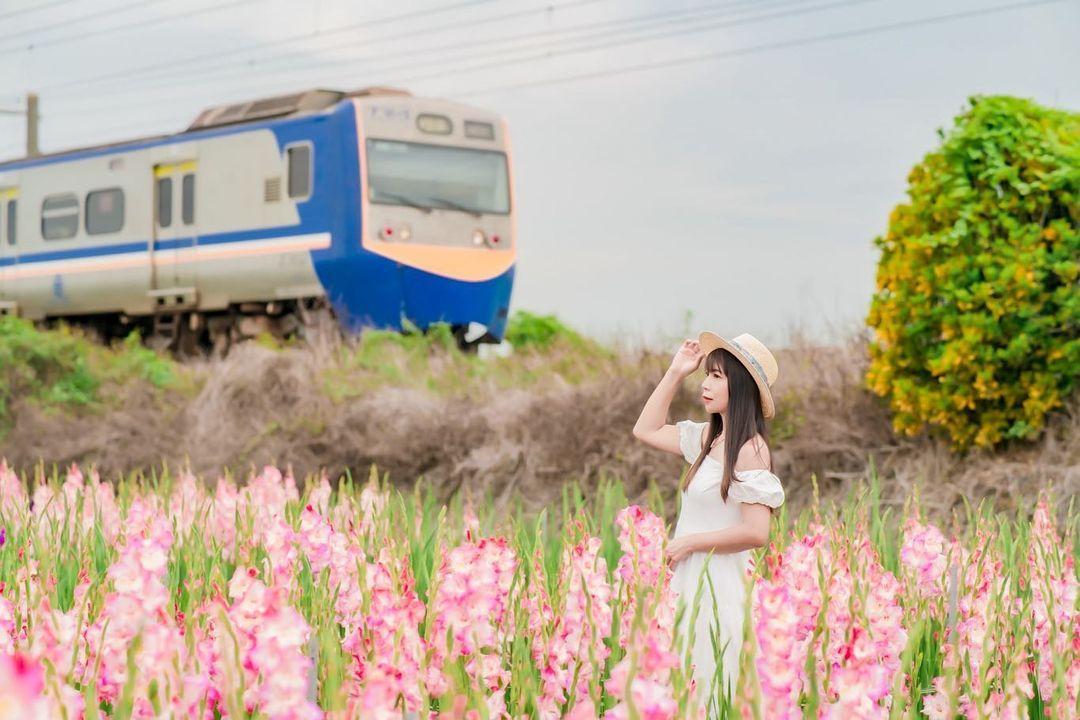 彰化社頭「粉紅劍蘭花海列車」5月新開放!紫劍蘭、康乃馨母親節即將滿開