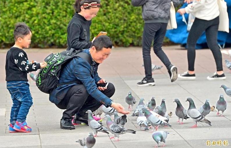 別再亂餵了!6/1起台北市公園「餵松鼠、鴿子」最高可罰6000元