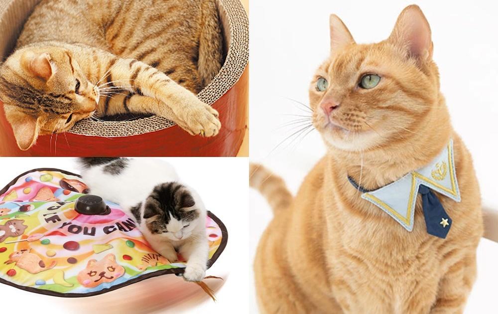 新手貓奴購物清單!網友推薦「健身玩具、抓板貓窩」這 7 樣必入手