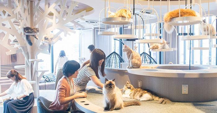 狂擼猛吸摸肚肚!日本 5 間人氣「貓咪咖啡館」20隻品種美貓坐檯超療癒