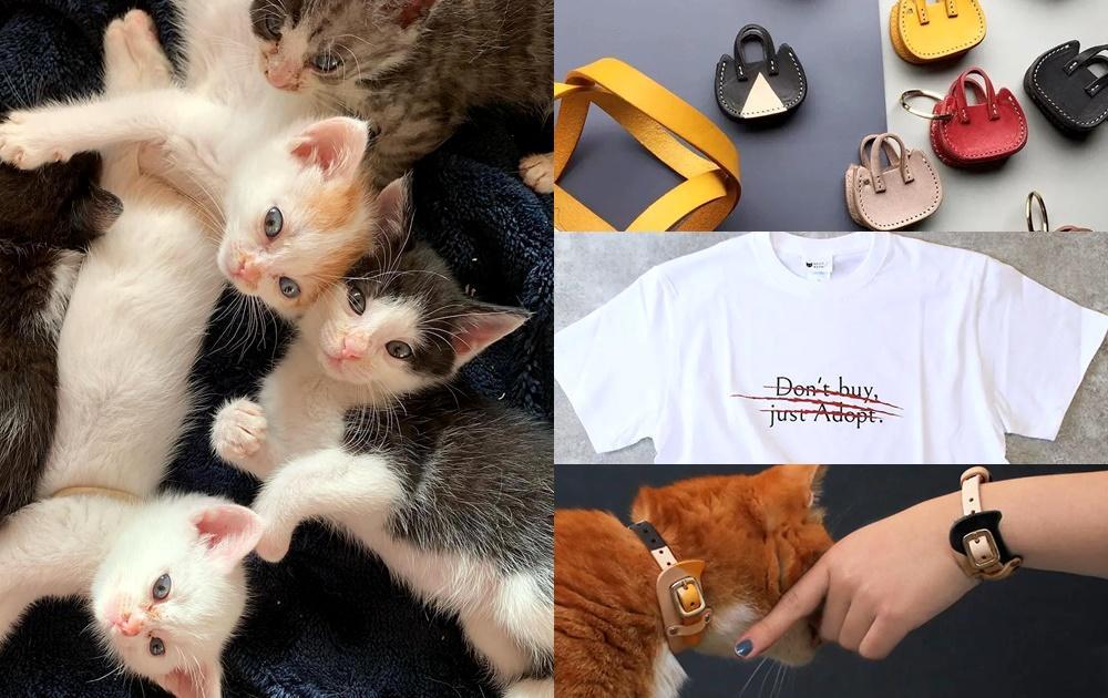 一年2萬7000隻浪貓被撲殺!日本成立「保護貓咖啡廳」靠超萌周邊救助喵喵