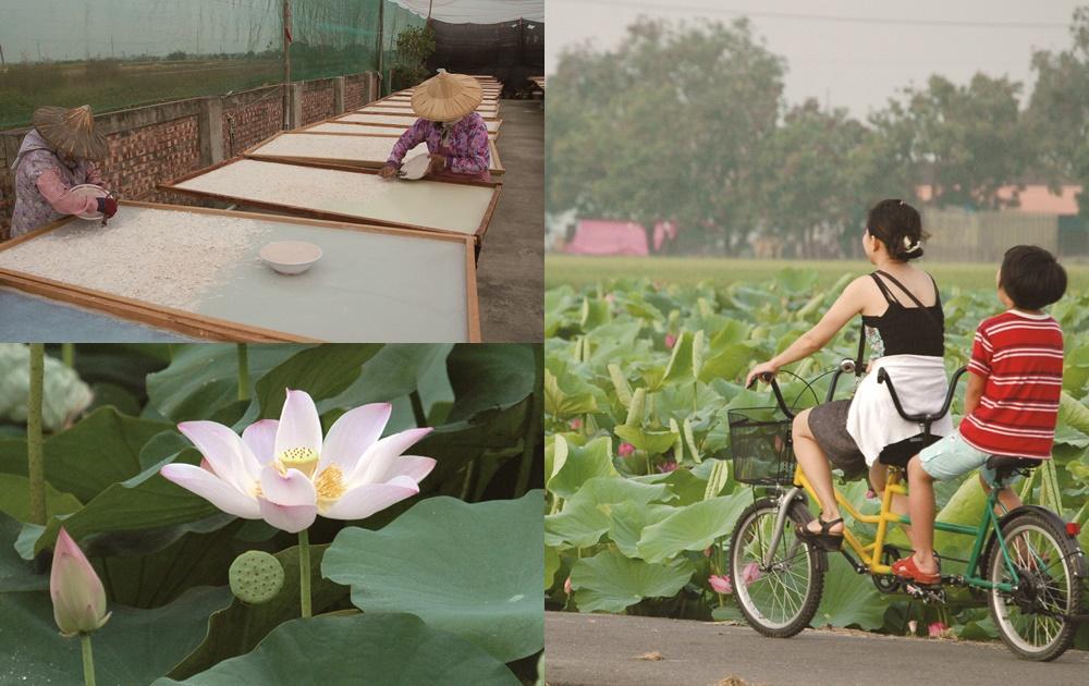 手刨 + 日曬成就珍貴藕粉!跟著旅遊作家「流蓮忘返」台南白河
