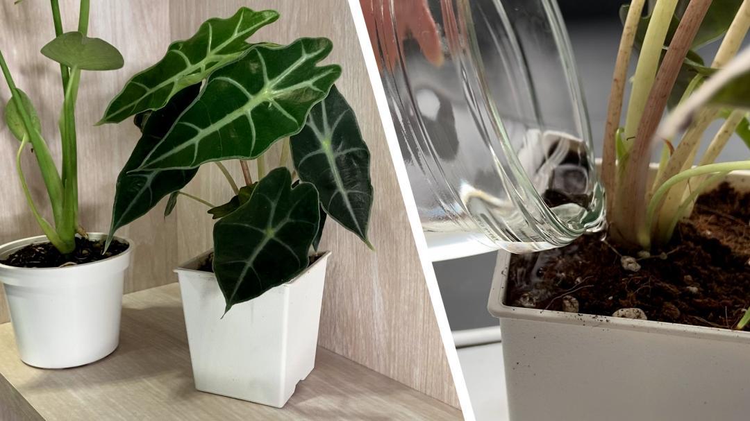 藝人&網紅都在種!要養活「觀葉植物」8 個常見NG行為不要做