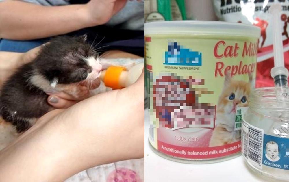 毛小孩可以喝「鮮奶」嗎?專家提醒新手飼主一大忌:幼犬貓別亂餵