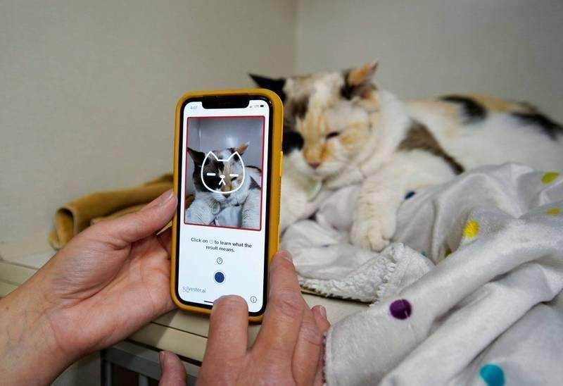 貓奴必備!科技公司開發App  拍照還能偵測毛小孩健康狀況