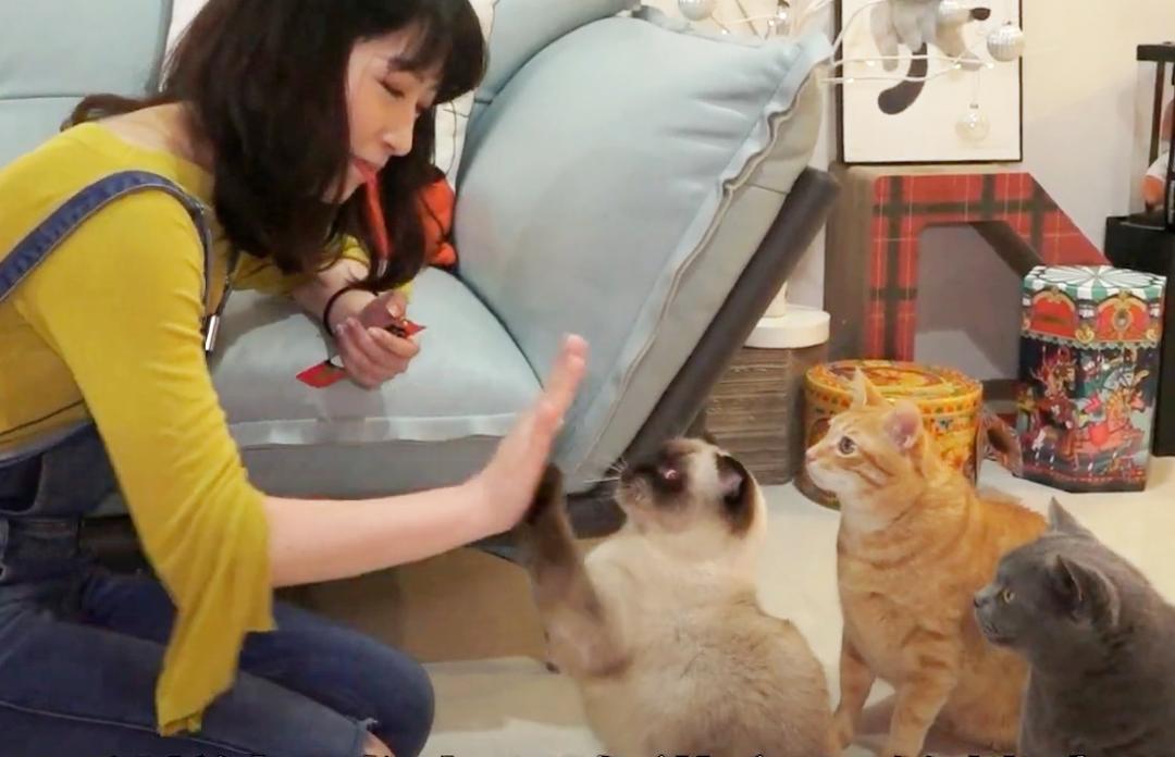 貓聽得懂名字?寵物訓練師親授「貓咪召喚術」3 技巧讓喵皇主動靠近