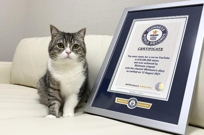 YT第一寵物網紅!萌貓 2 年狂吸「 6 億點閱」獲金氏世界紀錄認證