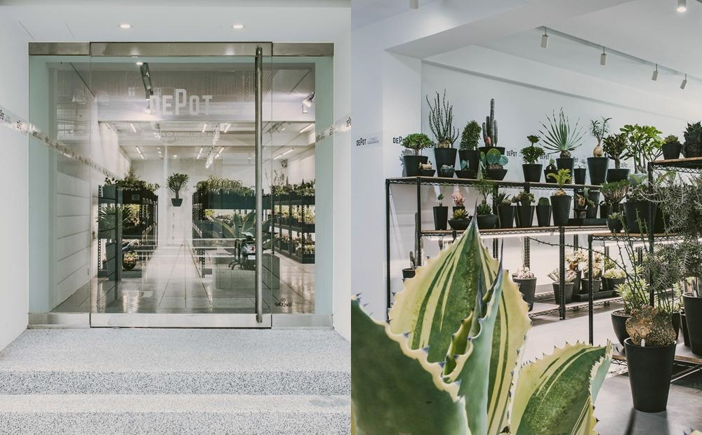 超過80種珍稀塊根植物!台北東區「最美植物市集」限時2週登場