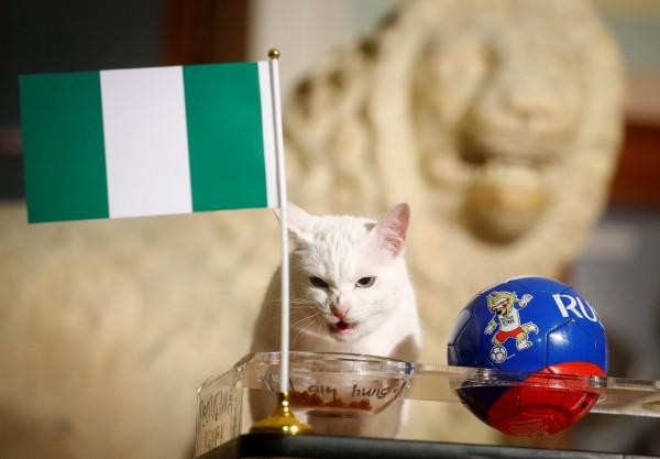世足賽》俄國神貓預測「奈及利亞」贏 梅西準備打包回家?