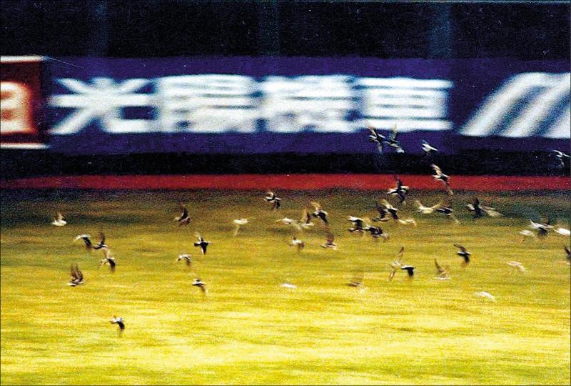 中職30系列22-5》921前一晚 鳥襲台北棒球場