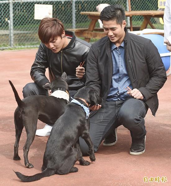 陳偉殷(右)與王維中(左)參訪板橋動物之家,愛狗的兩人與小狗互動親密。(記者陳志曲攝)