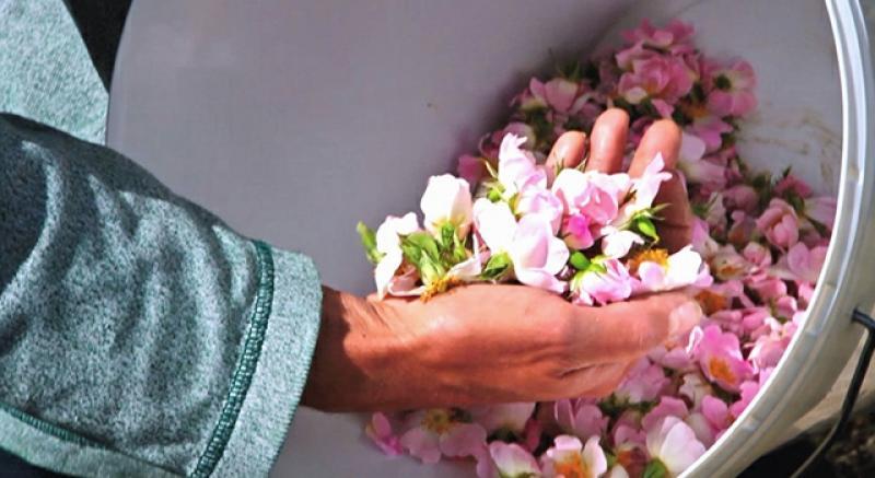 DDT毒玫瑰瓣流向化妝品!3招辨安全玫瑰花水
