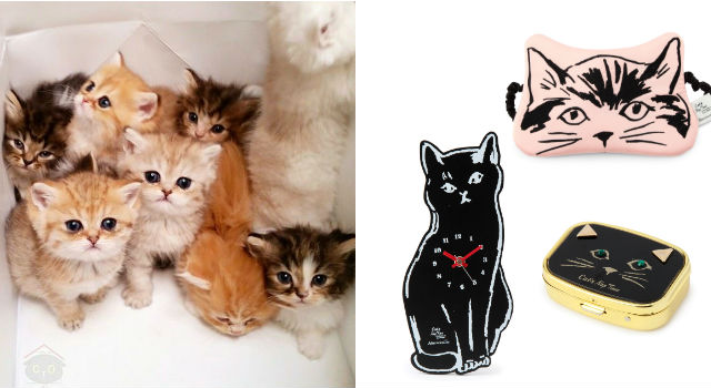 「喵星人」錢包小心!周年限定貓咪商品即將包圍你的生活