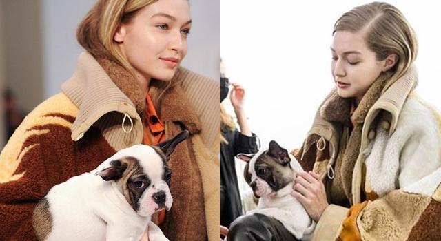 米蘭時裝週國際超模「抱毛孩」上陣!愛狗人士:牠們不是配件…