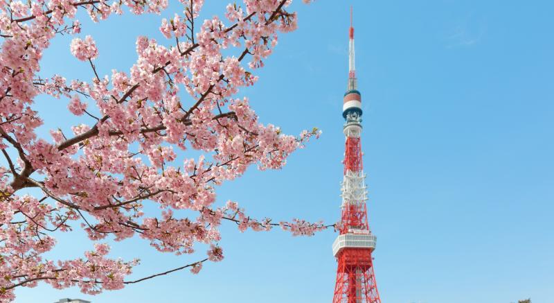 除了新宿御苑還可以去這裡!內行人才知道的東京五大賞櫻景點!