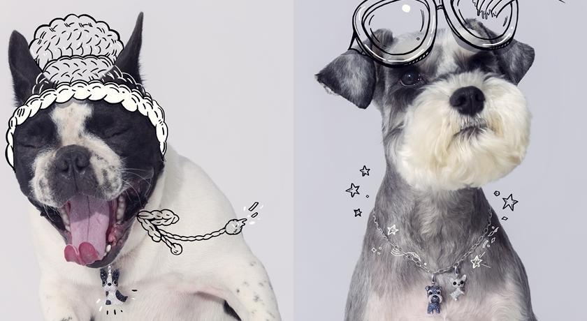 讓狗奴全都舉雙手投降!犬明星拍廣告「另類珠寶頸圈」萌翻天
