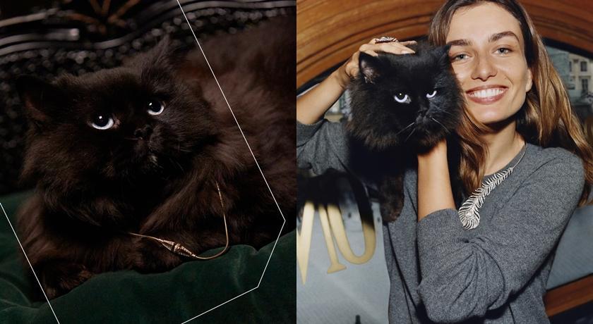 萌翻「動物珠寶」讓人想尖叫!可愛黑貓戴上鑽石項鍊毫無違和