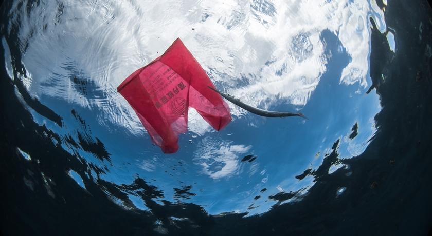 三小時撿破千支塑膠吸管!「驚人照片」可見岸上、海下全垃圾