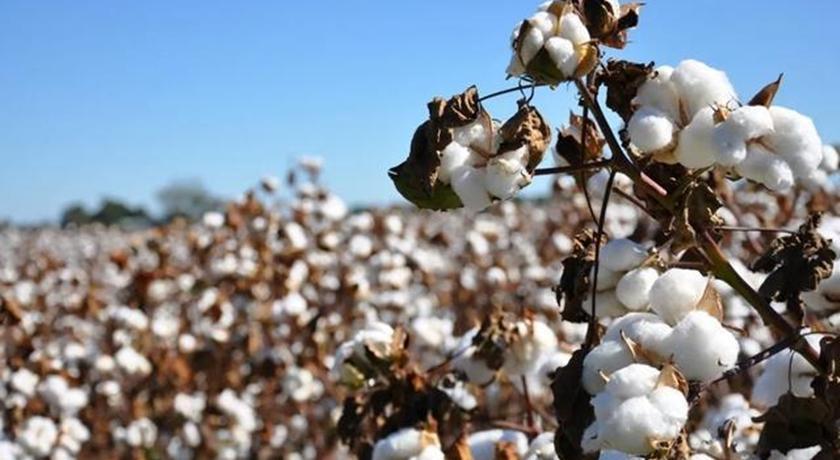 「新疆棉花」正式升格為中美戰!白宮呼籲:反對中國把市場當武器